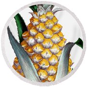 Pineapple, 1789 Round Beach Towel