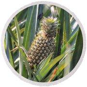 pineapple plantation in Kerala - India Round Beach Towel