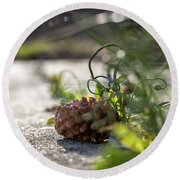 Pinecones And Wild Onions  Round Beach Towel