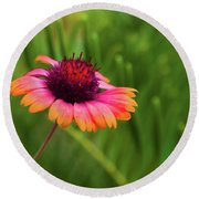 Pink And Orange Wild Daisy Round Beach Towel