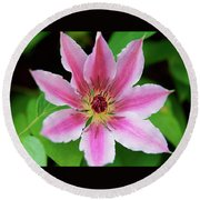 Pink And White Clematis Round Beach Towel