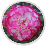 Pink And White Rose Square Round Beach Towel