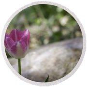 Pink And White Tulip 02 Round Beach Towel