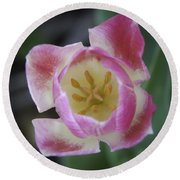 Pink And White Tulip Center Squared Round Beach Towel