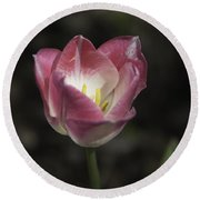 Pink And White Tulip Squared 2 Round Beach Towel