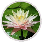 Pink And White Water Lily Round Beach Towel