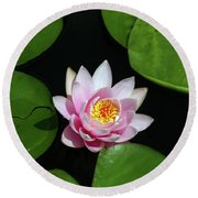 Pink And Yellow Lotus Waterlily Round Beach Towel