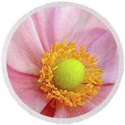 Pink Anemone Round Beach Towel