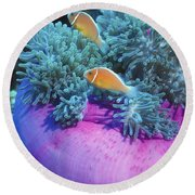 Pink Anemonefish Protect Their Purple Round Beach Towel by Michael Wood