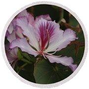 Pink Bauhinia Flower Round Beach Towel