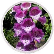 Pink Bell Flowers, Close-up. Foxglove 02 Round Beach Towel
