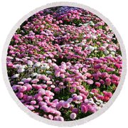Pink Button Pom Flowers Round Beach Towel