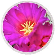 Pink Cacti Flowers Round Beach Towel