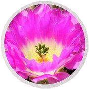Pink Cactus Flower Round Beach Towel