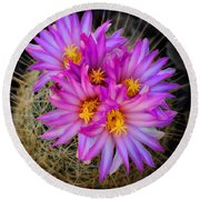 Pink Cactus Flowers Square  Round Beach Towel