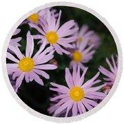 Pink Clara Curtis Daisy Chrysanthemum Round Beach Towel
