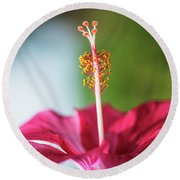 Pink Colored Hibiscus Closeup Image Round Beach Towel