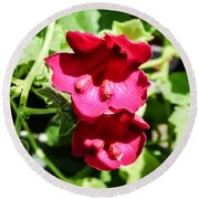 Pink Creeping Gloxinia Round Beach Towel