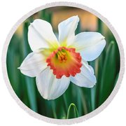 Pink Cup Solo Daffodil Round Beach Towel