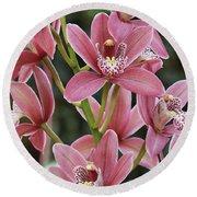 Pink Cymbidium Orchid #3 Round Beach Towel