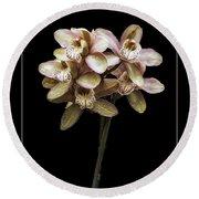 Pink Cymbidium Orchid Round Beach Towel