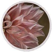 Pink Dahlia In Bloom Round Beach Towel