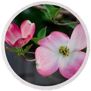 Pink Dogwood In The Morning Light Round Beach Towel