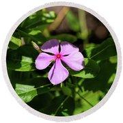 Pink Downy Phlox Wildflower Round Beach Towel