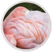 Pink Flamingo Hiding Its Head On Its Plumage. Round Beach Towel