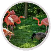 Pink Flamingos And Imposters Round Beach Towel