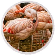 Pink Flamingos Round Beach Towel