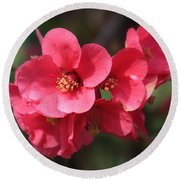 Pink Flowering Quince Round Beach Towel