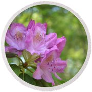 Pink Flowering Rhododendron Bush In Full Bloom Round Beach Towel