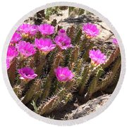 Pink Flowers In The Desert Round Beach Towel