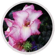 Pink Gladiola In Peru Round Beach Towel