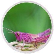 Pink Grasshopper Round Beach Towel