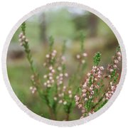 Pink Heather, Calluna Vulgaris, In Foggy Forest Round Beach Towel