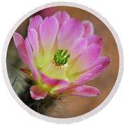 Pink Hedgehog Cactus Round Beach Towel