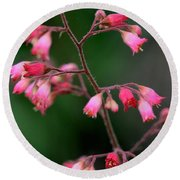 Pink Heuchera Flower 1 Round Beach Towel