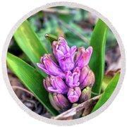 Pink Hyacinth Buds Round Beach Towel