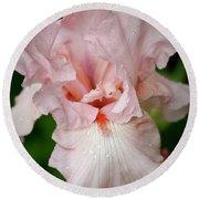 Pink Iris Study 15 Round Beach Towel