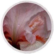 Pink Iris Study 5 Round Beach Towel