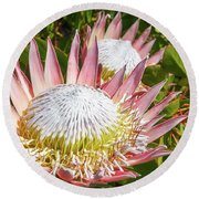 Pink King Protea Flowers Round Beach Towel
