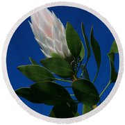 Pink King Protea Kula Maui Hawaii Round Beach Towel