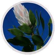 Pink King Protea Kula Maui Hawaii Round Beach Towel