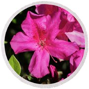 Pink Lilies Blooming Round Beach Towel