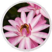 Pink Lotus Blossoms Round Beach Towel