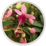 Pink Petalled Fuchsia Blooms              May         Indiana Round Beach Towel