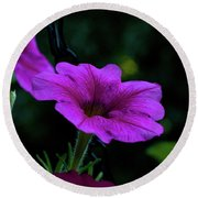 Pink Petunia, Dusk, Hunter Hill, Hagerstown, Maryland, July 25,  Round Beach Towel
