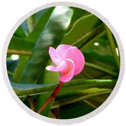 Pink Plumeria In Bloom Round Beach Towel